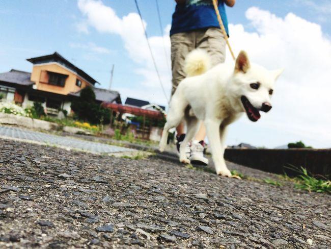 散歩 愛犬 可愛い