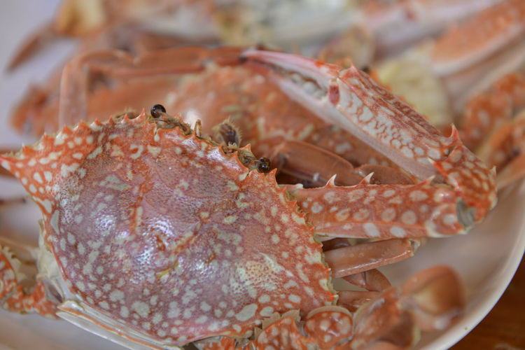 Close-up of crabs in plate