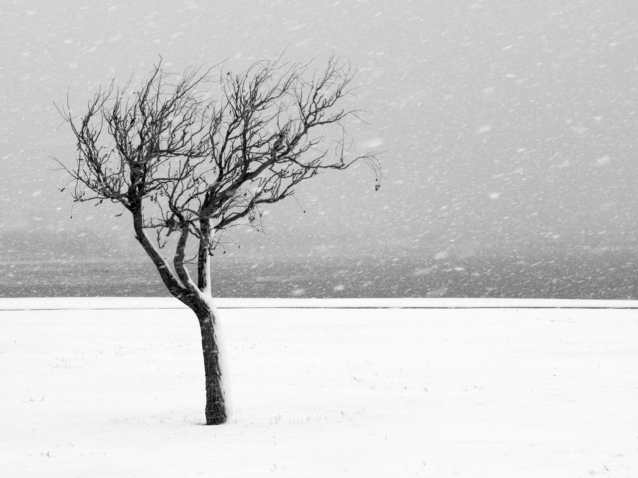 Bare Tree On Snow Covered Landscape During Storm
