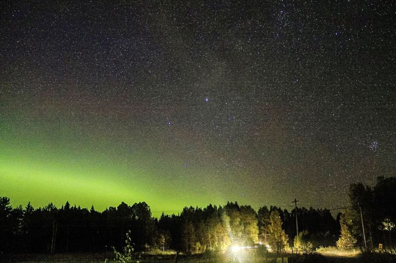 Northern lights in Sweden. Tree Tranquil Scene Night Tranquility Scenics Star - Space Dark Sky Nature Beauty In Nature Outdoors Non-urban Scene Majestic Star Field Multi Colored Bright Galaxy Solitude No People