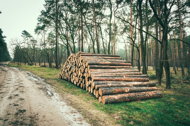 Stack Tree Deforestation Lumber Industry Log Timber Wood - Material Large Group Of Objects Environmental Issues Outdoors Day Woodpile Tree Trunk Heap Grass Nature Forestry Industry Pile No People Abundance
