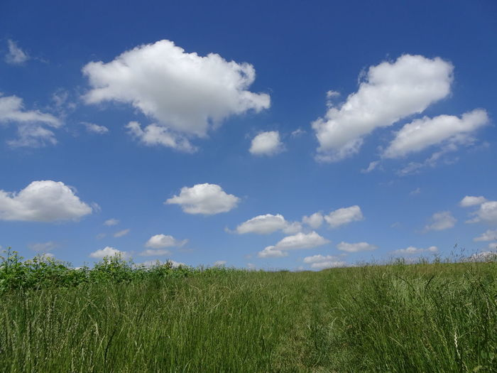 Agriculture Beauty In Nature Cloud - Sky Day Environment Field Grass Green Color Growth Horizon Over Land Land Landscape Nature No People Outdoors Plant Rural Scene Scenics - Nature Sky Tranquil Scene Tranquility