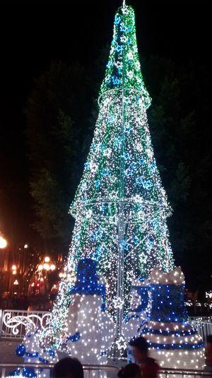 Christmaslights Christmas Lights Christmas Tree Tree Lights