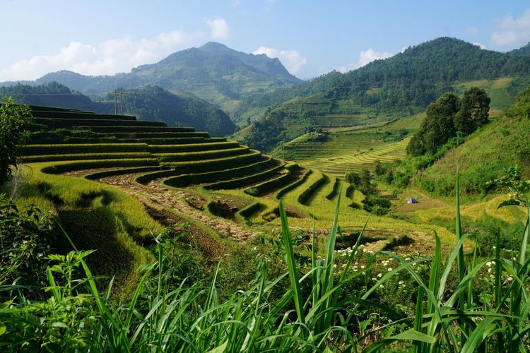 EyeEm Vietnam Travel Destinations Travel Photography Mucangchai Vietnam Landscape Farm Beauty In Nature