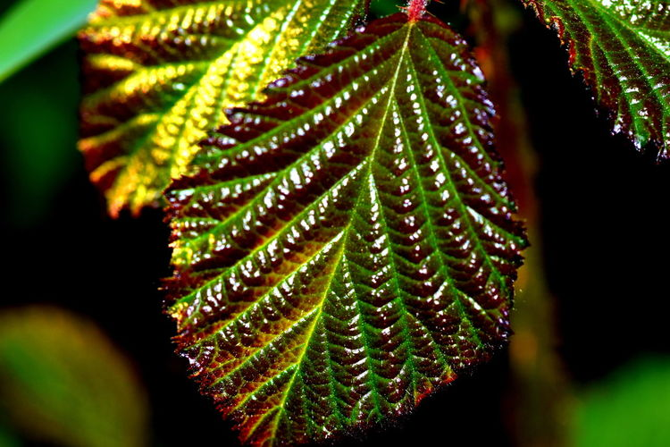 Beauty In Nature Close-up Focus On Foreground Green Color Leaf Leaf Vein Leaves Macro Natural Pattern Nature Plant