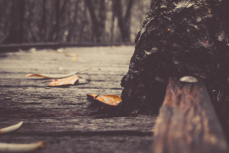 Close-Up Of Fallen Leaves On Boardwalk