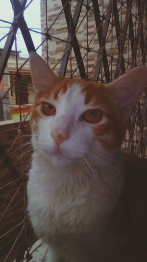 Looking At Camera One Animal Pets Portrait One Person Adult Close-up People Day Domestic Animals Outdoors Adults Only Animal Themes One Woman Only Mammal Cat