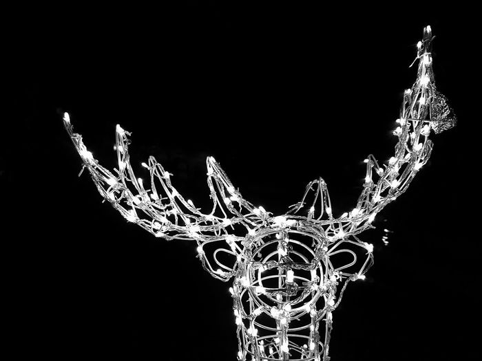 Christmas Decoration Christmas Black Background No People Close-up Outdoors Night Samsung Galaxy S7 Edge Black And White Phone Photography Ormoc City Ph Christmas Lights Philippines 2017 City Of Beautiful People Home Of Beautiful People Focus Reindeer Deer Sabin Resort Hotel Sabin Hotel Nightphotography Night Photography Night Lights