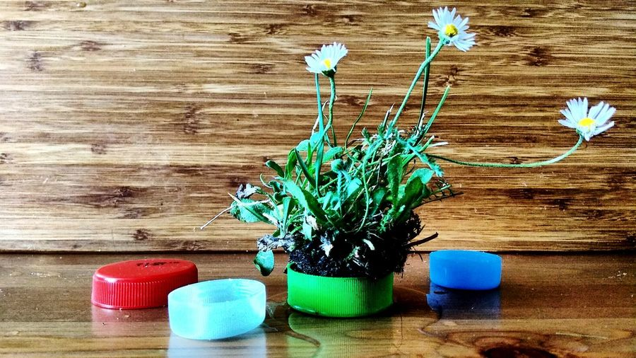 Four concepts of plastic... (4/4) Daisy Flower Daisys Yellow Flower Spring Flowers Plastic Wood Wood - Material Plastic Cap Plastic Caps Red Red Color Red Cap Blue Blue Cap Green Green Color Green Cap EyeEm Selects Wood - Material Table Flower Close-up Wooden Young Plant Plastic Environment - LIMEX IMAGINE
