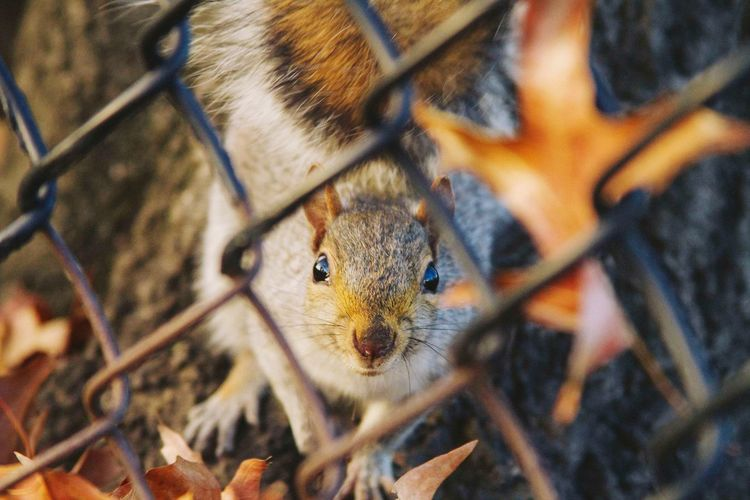 Animal Wildlife Nature Squirrel