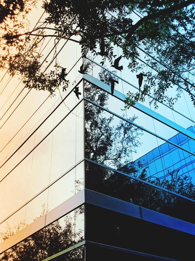 """Split View; Real verses reflection """" Corners And Edges Large Building Glass - Material A Different Perspective Mutlticolored Windows Plant Life Birds Multiple Reflections Tree Modern Sunlight Sky Building Exterior Architecture Close-up Built Structure Office Building High Rise Skyline Tall - High Transparent"""