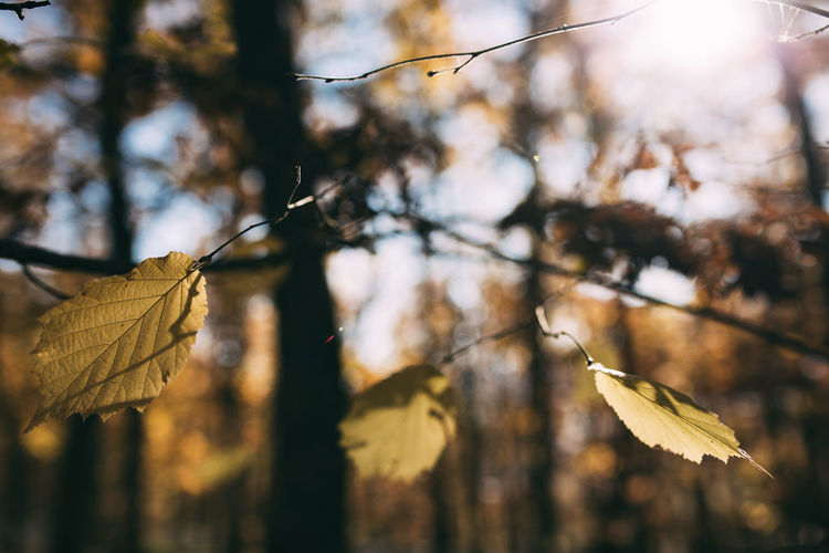 Plant Nature Growth Day Focus On Foreground Beauty In Nature Outdoors Close-up Forest Photography Leaves🌿 Leaves_collection Leaves 🍁 Autumn colors Autumn Leaves Sunlight Trees Bokeh Bokeh Photography Bokeh Lights autumn mood Bokeh Love Warm Colors Warm Light