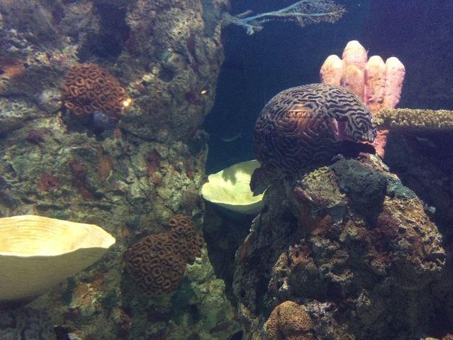 Under da Sea Underwater Sea Life