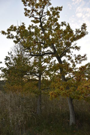 Barton Broad Barton Turf Beauty In Nature Day Growth Landscape Nature No People Oak Trees Outdoors Sky Tranquility Tree