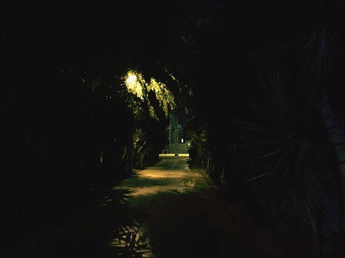 Jungle on the street Night No People Feeling Free Eye4photography  The City Light Minimalist Architecture The Week On EyeEm EyeEmNewHere Breathing Space