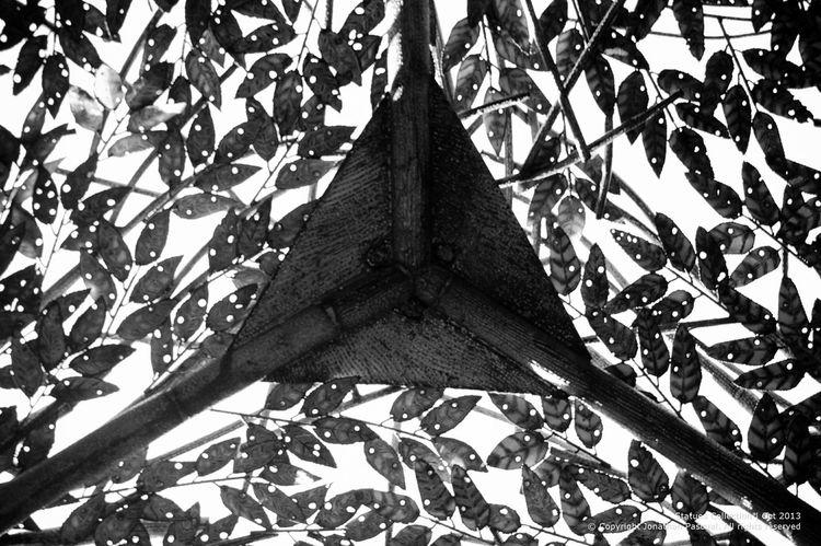 Triangle. Found inside the metallic tree in Burgos circle. Eeyemphilippines Blackandwhite Photography Shapes Trees Monochrome