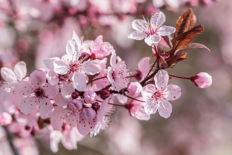 pink blossom Nature Spring Macro Flower Flowering Plant Plant Freshness Fragility Blossom Beauty In Nature Springtime Pink Color Close-up Nature Branch Petal