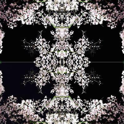 桜 Monochrome Japan Cherry Blossoms Spring