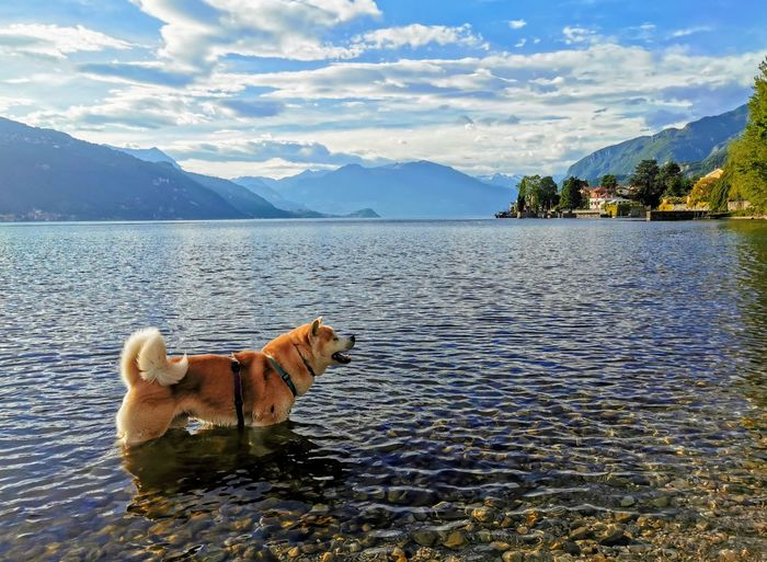 View of a dog in lake against mountain range