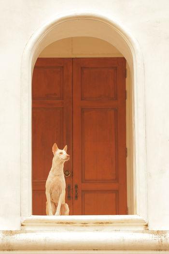Dog sitting against closed door