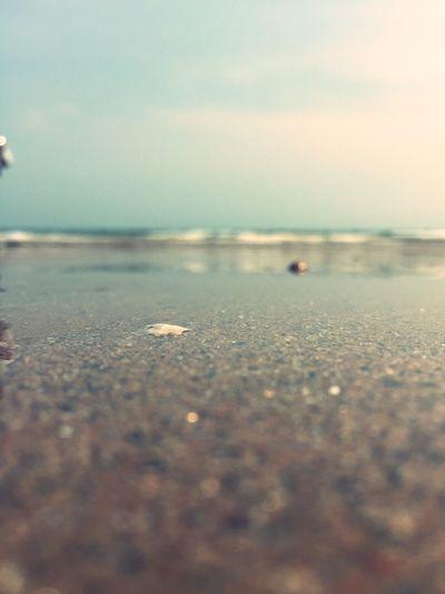 突然想起螃蟹的视角是什么样的?它们看见的海会很美吧!