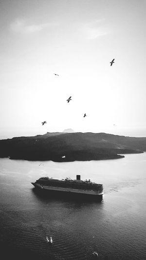 Bird Flying Sea Silhouette Flock Of Birds Water Sky Animal Themes