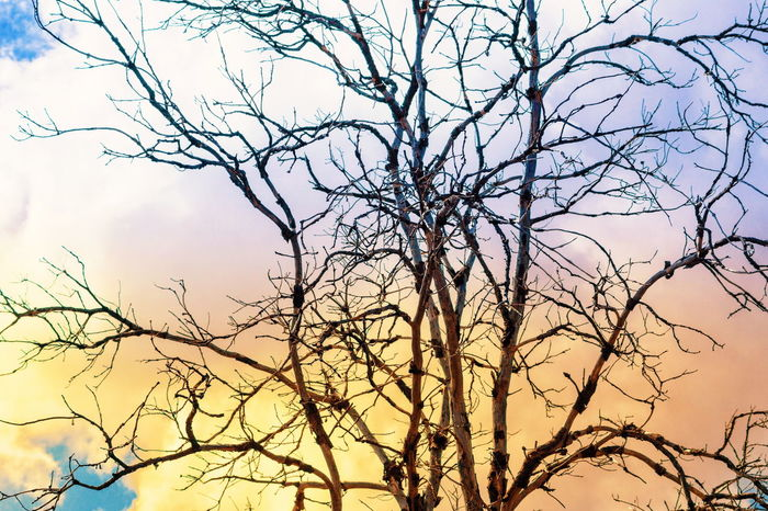 Nature Branch Bare Tree Sky Tree Beauty In Nature Outdoors No People Silhouette Day Backgrounds Scenics Close-up Dead Tree Tree Branches Tree Rural Scene Mountain Vibrant Color Sky Trees And Sky