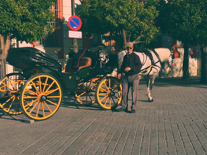 Sevilla, Spain. Fun Moments Pictures Horse Captured Moment Lilbitsneaky Ohwell SPAIN