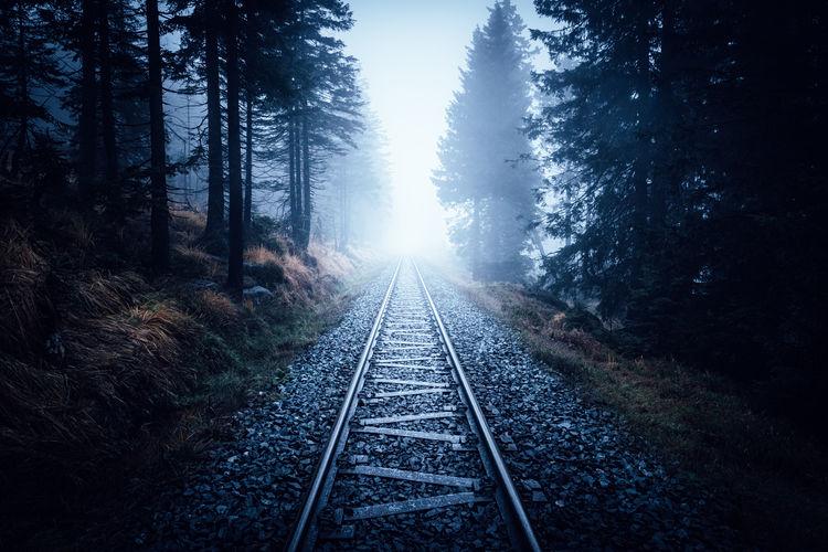 Railroad tracks amidst trees against foggy sky