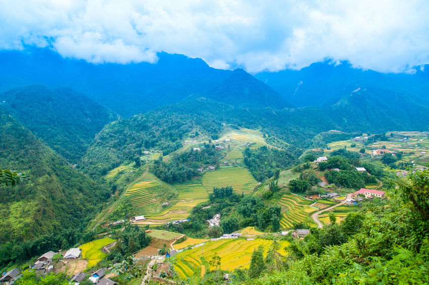 Vietnam Rice Fields Sapa SAPANCAGÖLÜ Sapa Sapa, Vietnam Vietnam Agriculture Beauty In Nature Cloud - Sky Growth High Angle View Landscape Mountain Mountain Range No People Outdoors Plant Rice Fields  Rice Fields And Mountains Rice Fields And Water Rural Scene Scenics Sky Terraced Field Tranquil Scene Tranquility Tree