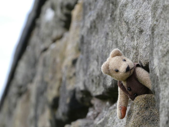 Boo !!! Tiny Teddy Bear Low Angle View Outdoors Close-up No People Stone Wall Miniature Toy Cute Just For Fun To Make You Smile Lighthearted Teddy Goes Rock Climbing Again! Day Having Fun Fur Face A Little Crazy Is Always Needed!