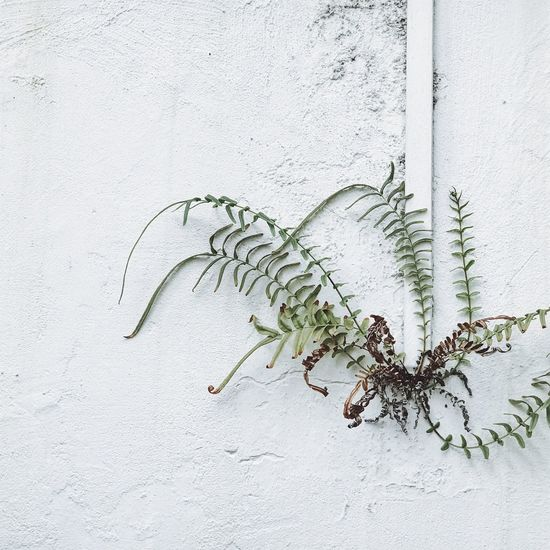 The Minimals (less Edit Juxt Photography) VSCO Singapore Minimal Perspective No People The Week On EyeEm Simple Plant Nature Exterior
