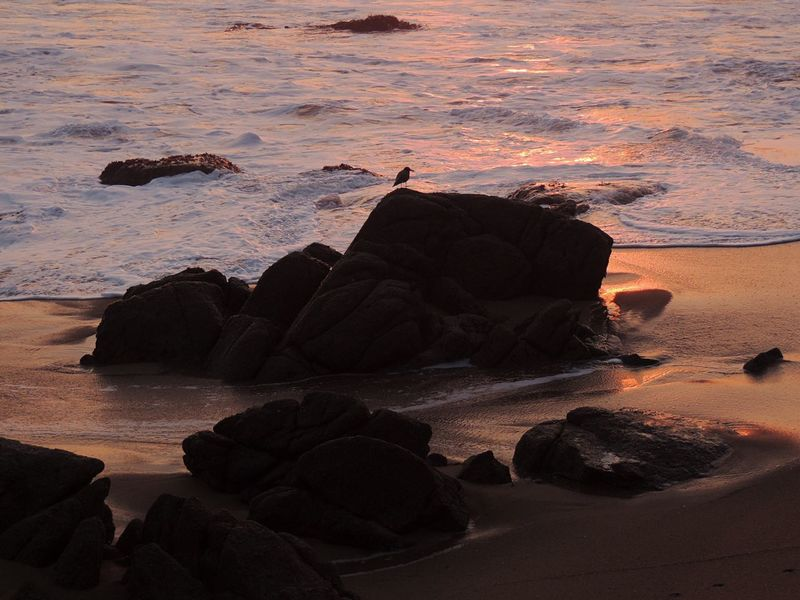 Waiting For The Sunset Beach Photography Life Is A Beach Waves, Ocean, Nature Bird On The Beach Alone Sea And Rocks Sand & Sea Sand Reflection Sand And Waves Waves Tranquil Scene Reñaca Beach , Chile