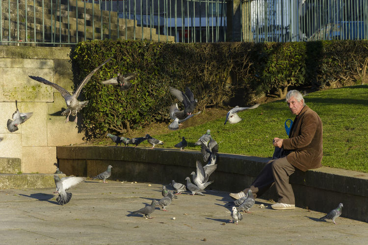 Man and birds in park