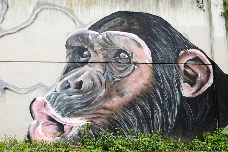 Chimp Chimpanzee Graffiti Grafiti Art Mural Mural Art Painting Schimpanse Shouting Art Is Everywhere
