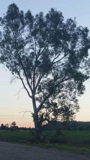 Tree, Silhouette