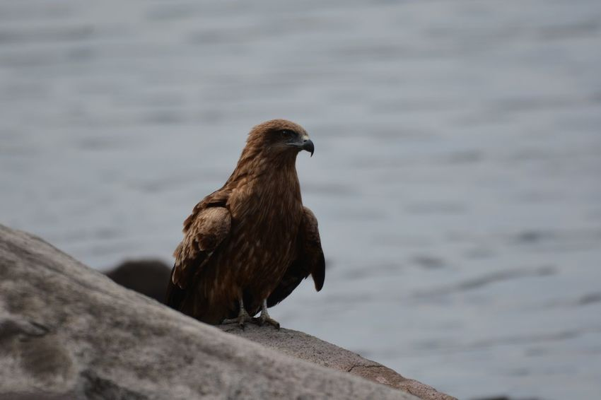Animal Animal Themes Bird Animal Wildlife Animals In The Wild Vertebrate One Animal