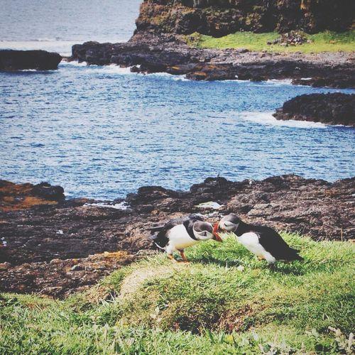 Birds on sea shore