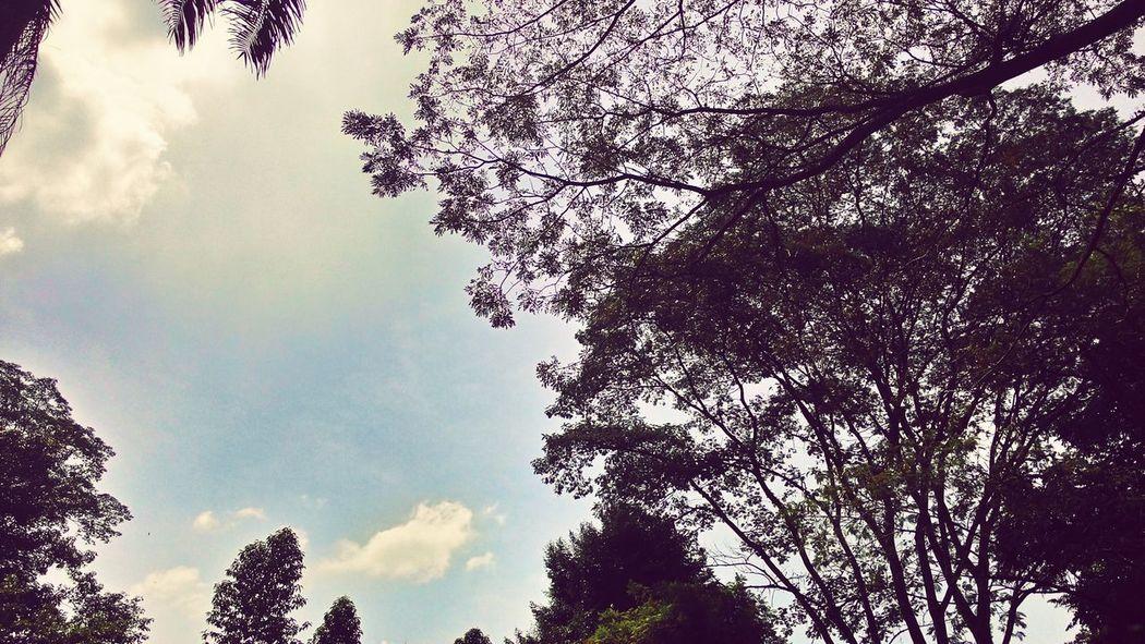 Hi Sky! Enjoying The Sun Sky And Clouds Tree And Sky Bogor Ipb