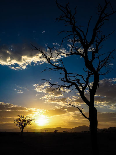 View of peaceful morning sunrise with dead tree and cloud Desert Morning Namibia Silhouette Bare Tree Beauty In Nature Branch Cloud - Sky Environment Hidden Valley Idyllic Landscape Nature No People Non-urban Scene Orange Color Outdoors Plant Scenics - Nature Silhouette Sky Sunrise Tranquil Scene Tranquility Tree