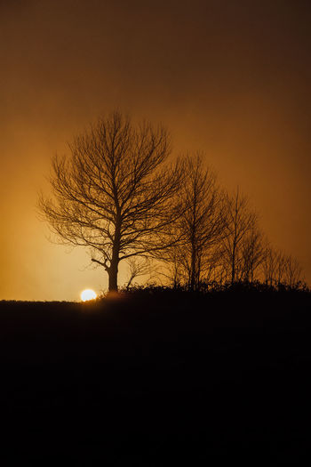 Trees in sunset Silhouette Sunset Tree Tranquil Scene Tranquility Beauty In Nature Orange Color Environment Bare Tree Landscape Nature Scenics - Nature Outdoors Non-urban Scene Sun Mountain EyeEm Nature Lover Serbia