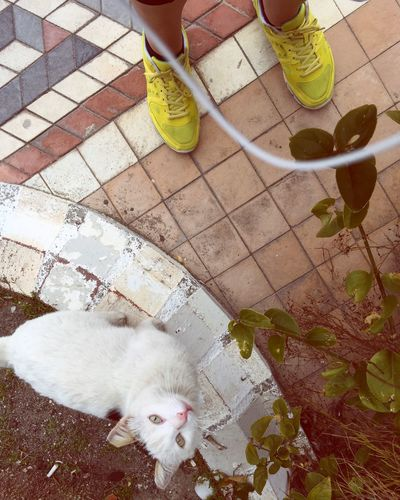 A stray cat met during a walk Animal Animal Themes Beautiful Blog Cat Domestic Cat Marmaris Meow Nature Sneakers Spring Stranger Stray Cat Street Tourism Tourism Destination Tourist Tourists Travel Travel Blog Travel Destinations Turkey Turkish Cat Walking Walking Shoes