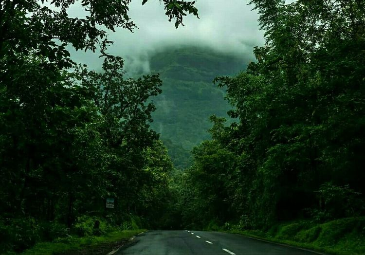 Tree Transportation Road The Way Forward Tranquil Scene Tranquility Non-urban Scene Nature Green Color Scenics Empty Road Solitude Branch