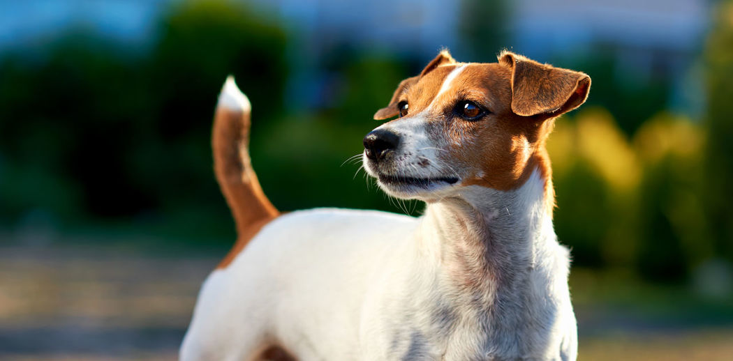 Close-up of dog standing outdoors
