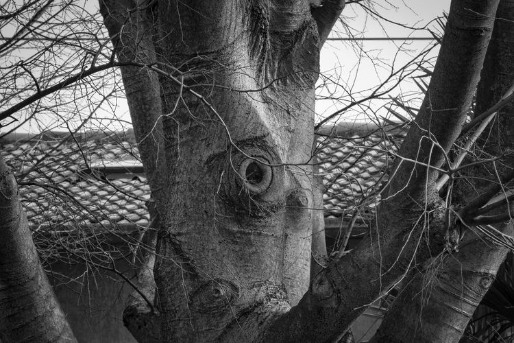 Giant Squid or tree? Bare Tree Black And White Branch Close-up Day Dead Tree Nature No People Outdoors Sky Tree Tree Trunk