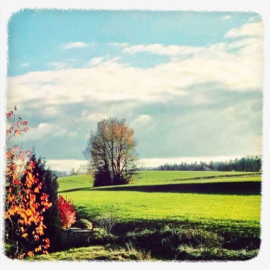 HDR Autumn Cloudy