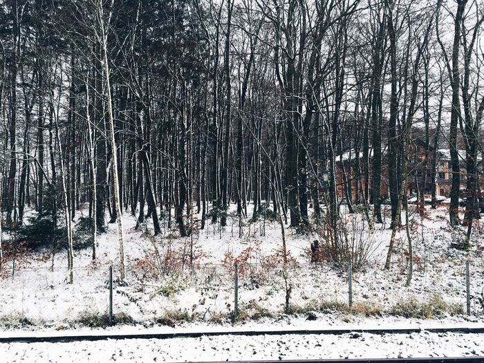 Snow❄️❄️❄️ Snow