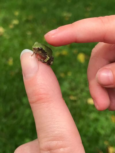 Baby tree frog, green, hand, touch, outdoors Pet Portraits
