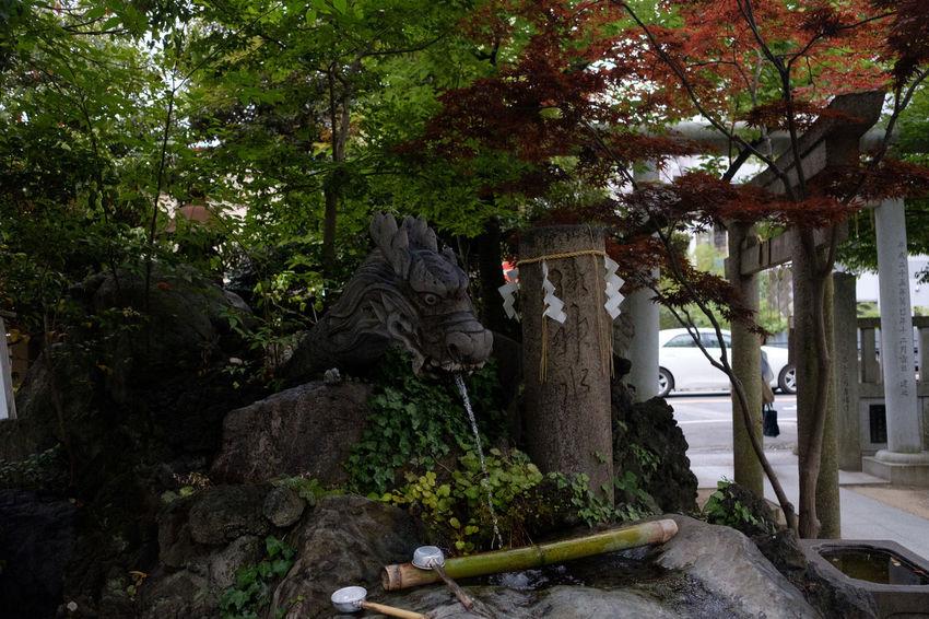 FUJIFILM X-T2 Japan Japan Photography Matsudo Shrine Shrine Of Japan Shrines & Temples Fujifilm Fujifilm_xseries X-t2 松戸 松戸神社 神社