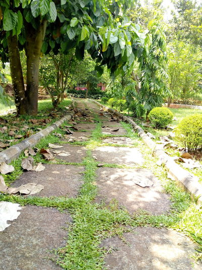 #peaceful way #JustMe #Nature  #beautiful #filling Lonely #love Tress #greenery #its Summer #sunny Day Tree Sunlight Shadow Leaf Grass Plant Green Color Fallen Leaf